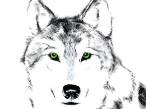 <h5>Sprit Wolf - Animal guide</h5><p>                                                                                                      </p>